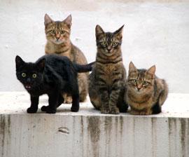kittens_group_270x224