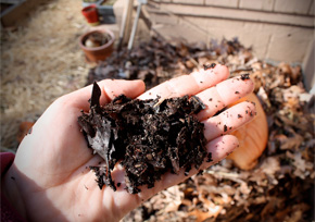 Coffee grounds in your compost