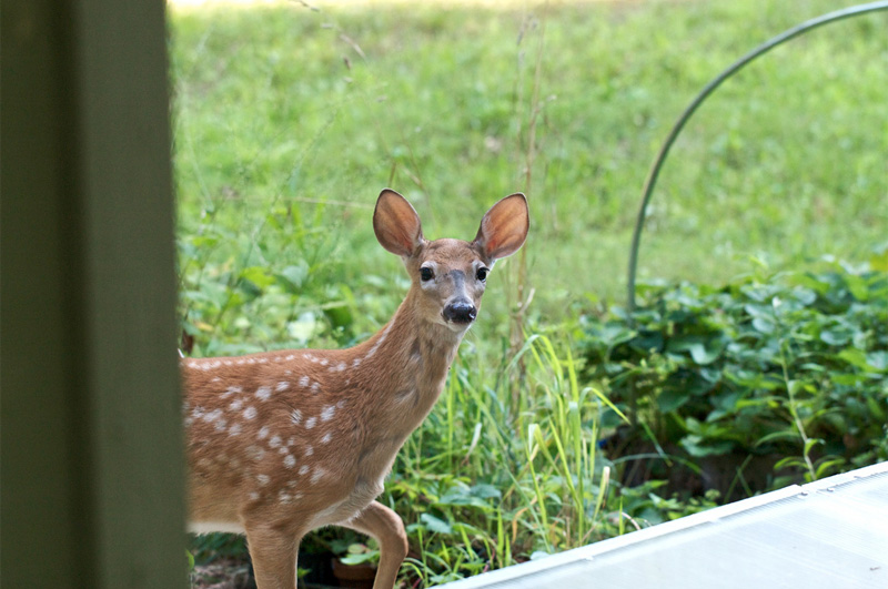 Are deer eating your plants or trees?