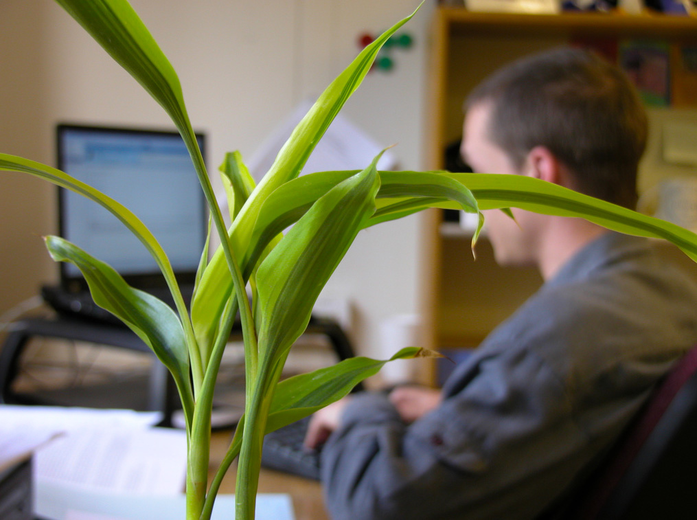 Find Out What Indoor Plants Thrive In Low Light »