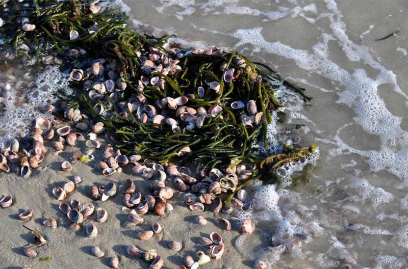 Using seaweed in your garden
