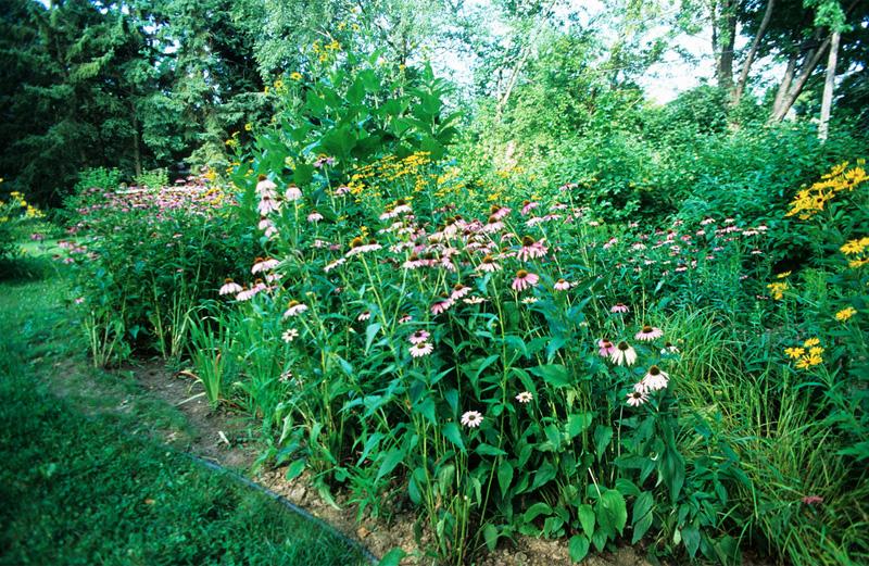 How to plant a rain garden