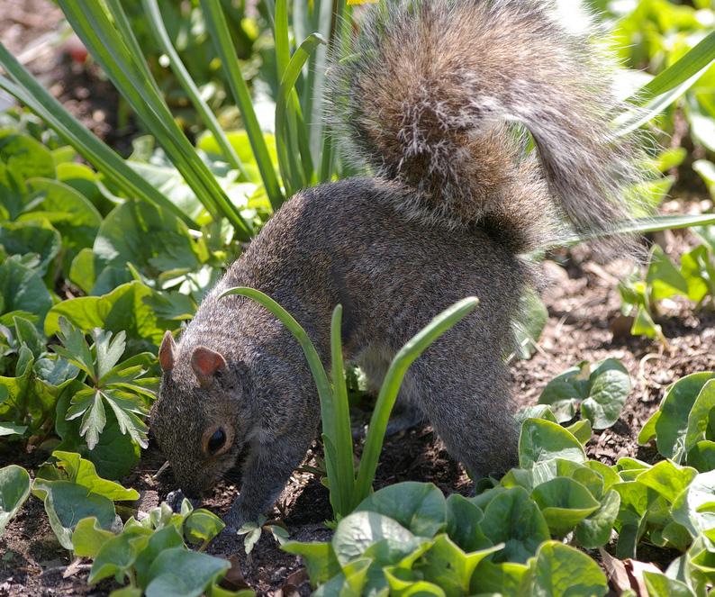 Getting rid of squirrels