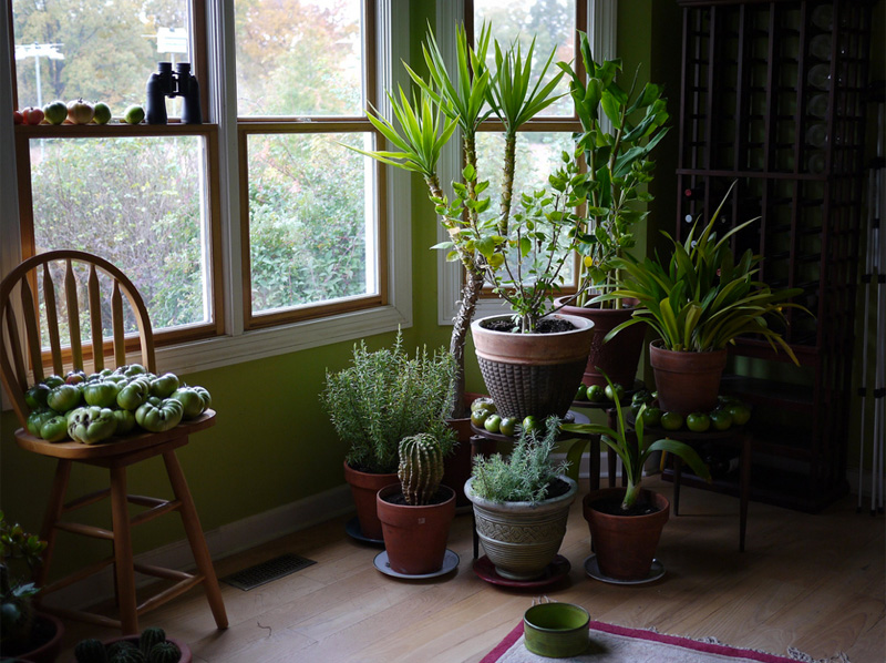 Learn What To Do When Your Houseplants Outgrow House