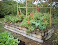 a raised bed in a vegetable garden