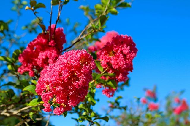 flowers-1696047_640