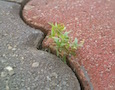 a plant sprouting from a crack in the sidewalk