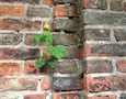 a weed in a brick walkway