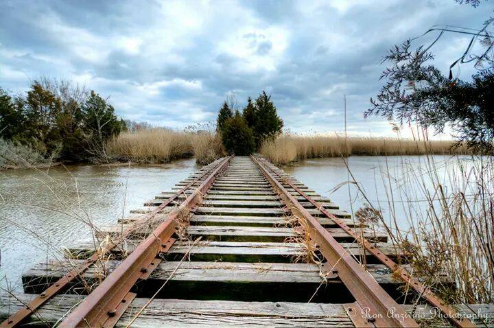 Abandoned tracks of the Mauricetown Railroad on the Delaware Bay. (Photo: JSHN contributor Ron Anzivino)