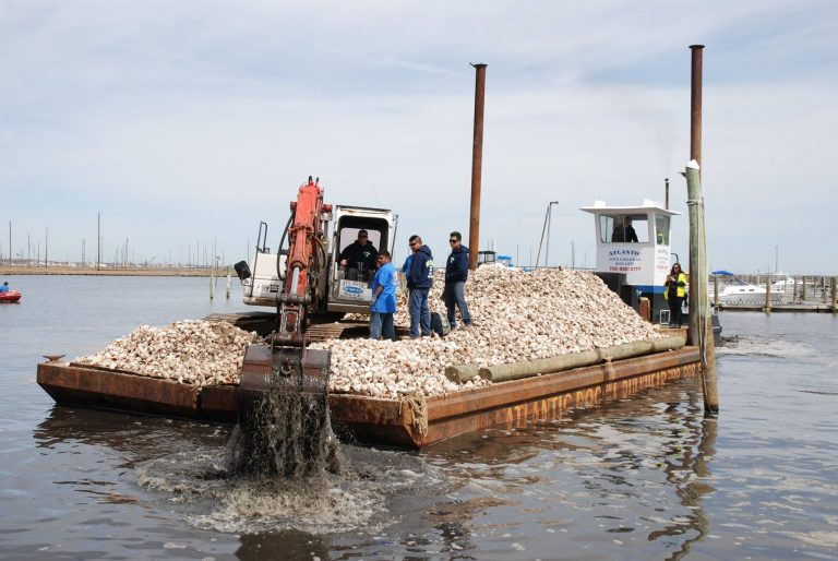 Whelk shells are deposited into the Barnegat Bay Thursday. (Photo courtesy of Congressman Tom MacArthur)