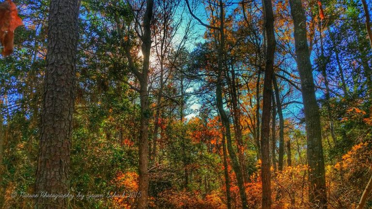 Autumn color at Enos Pond County Park in  Forked River on Nov. 20, 2015. (Photo: JSHN contributor Jason Schack)