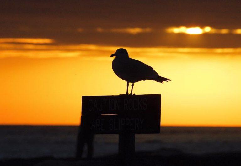 Thanksgiving Day sunrise at Barnegat Light by JSHN contributor Lance Schnatterly.