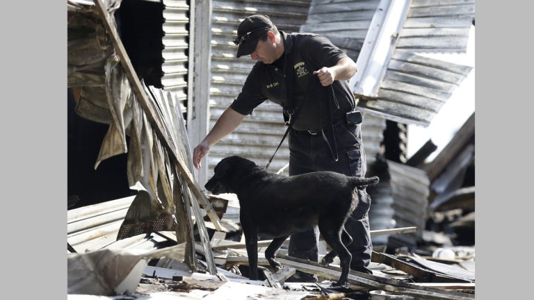 An investigator works with a dog at the scene of the boardwalk fire. (AP Photo/Julio Cortez)