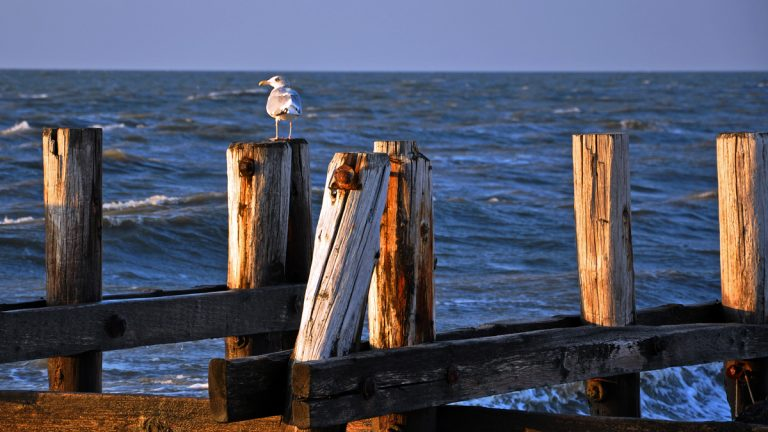 Seagull on pier pilings at Sunset Beach, Cape May, New Jersey (File photo)