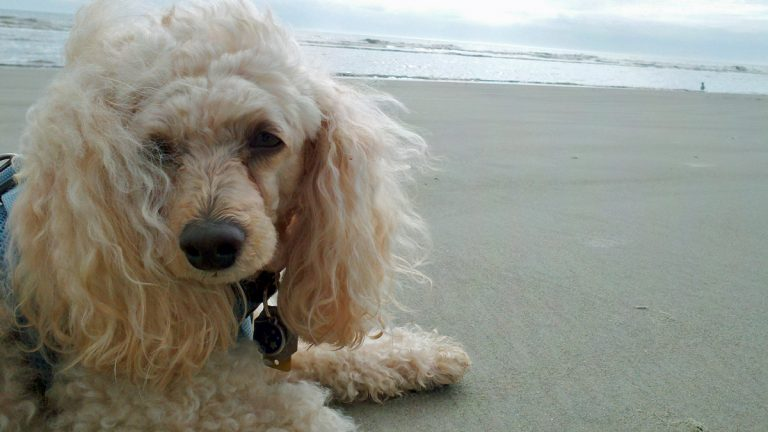 Rules for dogs on the beach vary from town to town.. (Alan Tu/WHYY