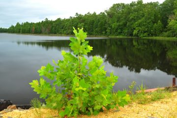 Wharton State Forest (Shutterstock)