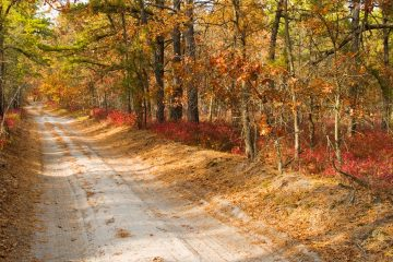 A sandy road within New Jersey's pine barrens. (Shutterstock image-file)