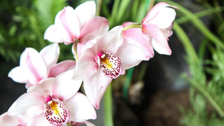 Orchids surround a lagoon in Waldor Orchid's Peter Pan inspired exhibit. (Kimberly Paynter/WHYY)