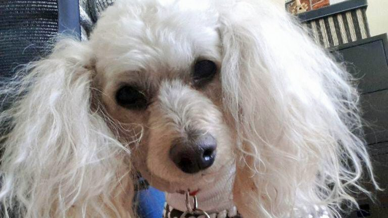Words appear to have significance to dogs  (Alan Tu/WHYY)