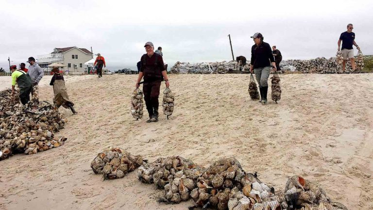 Volunteers working to help build an oyster reef in Newport