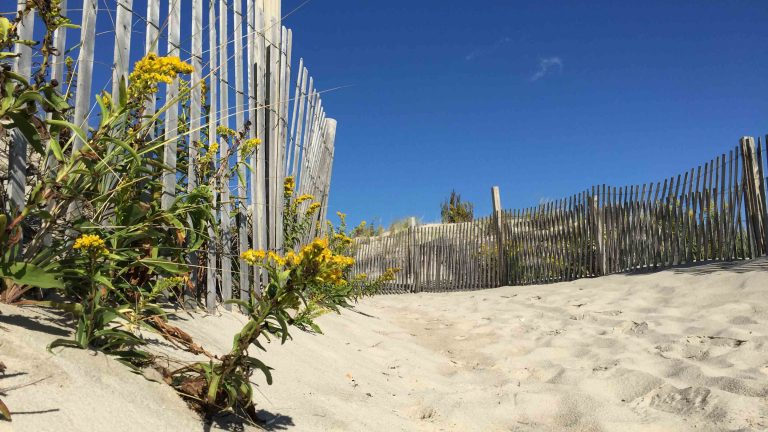 Time appropriate as seaside goldenrod is now in bloom. This is from So. Seaside in Oct 2014.