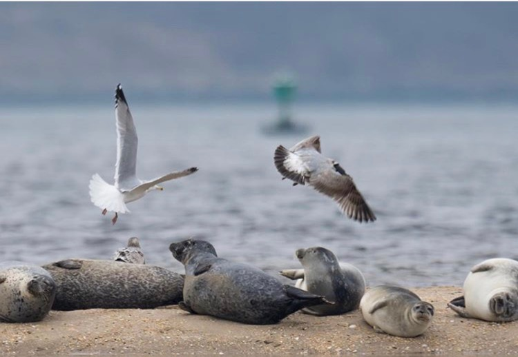 S is for seals and seagulls