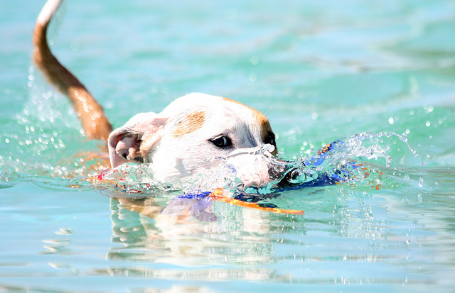 A dog playing in the water. (Photo: feeferlump via Flickr)