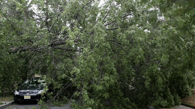 New Jersey Assemblyman Wayne DeAngelo wants to clear the way for utilities to remove or prune tress that are too near power lines in an effort to prevent outages. (AP file photo)