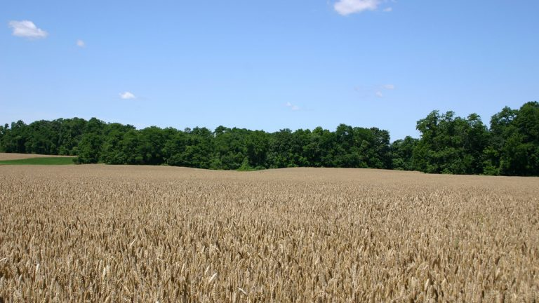 Acquisition of farmland for preservation in New Jersey is stalled because a state funding initiative has not been implemented more than a year after voters endorsed it. (Bigstock)