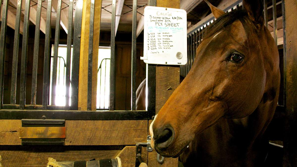 Calvin pops his head outside of his stall where a white board lists his rigorous medication schedule. (Nathaniel Hamilton/for NewsWorks)