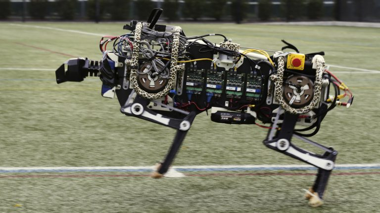 A robotic cheetah runs on an athletic field at the Massachusetts Institute of Technology in Cambridge, Mass.  MIT scientists said the robot, modeled after the fastest land animal, may have real-world applications, including for prosthetic legs. (AP Photo/Charles Krupa)