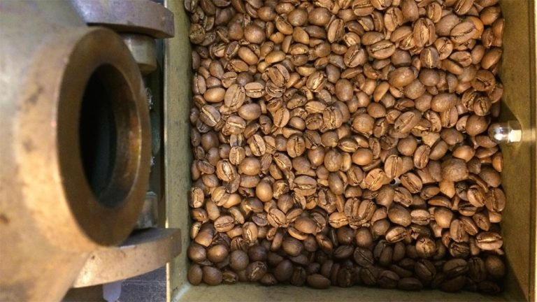 These freshly roasted beans were pea green just moments prior