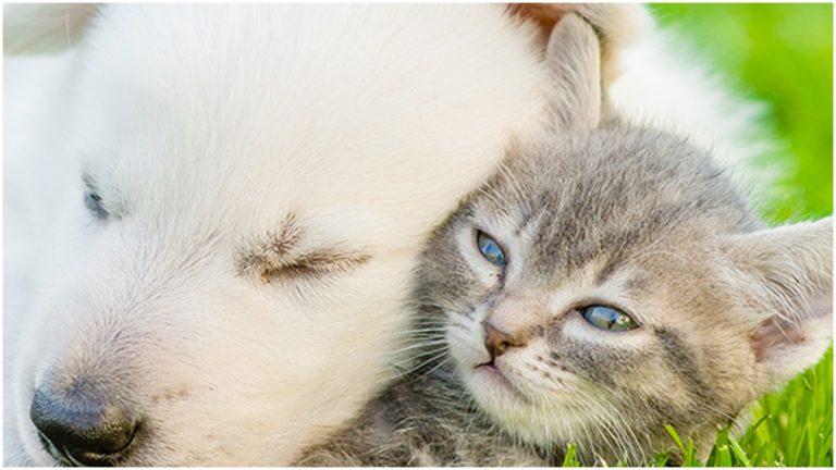 (Office of Animal Welfare photo)