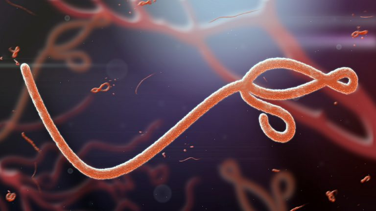 Greatly magnified view of the Ebola virus. (Shutterstock)