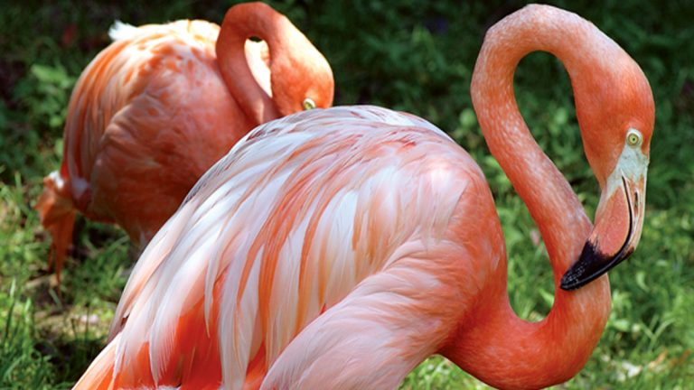Two of Anderson's research subjects on view at the Bird Valley exhibit at The Philadelphia Zoo.  (Courtesy of The Philadelphia Zoo)