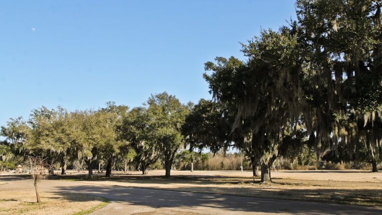 Spanish moss hangs from live oak trees at Fontainebleau State Park a few miles out of Mandeville Louisiana. (Anders Morholt/for NewsWorks)