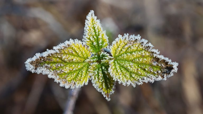 Morning frost (Big Stock photo)