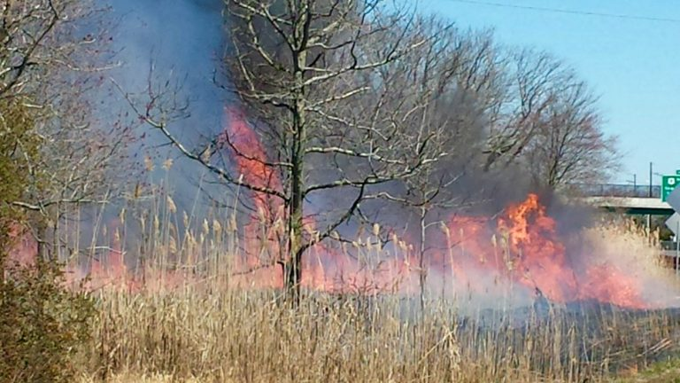 A large brush fire burning near the Garden State Parkway this afternoon in Port Republic. (Photo: JSHN contributor Steve Frey)