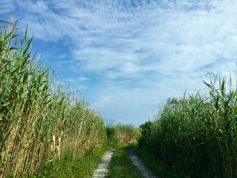 A trail to the Barnegat Bay in Island Beach State Park. (Photo: Justin Auciello/for NewsWorks)