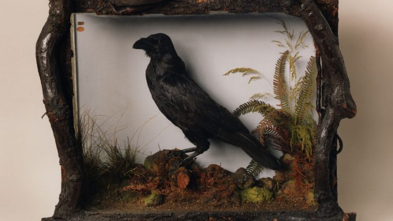 You don't have to be an English major to appreciate the awesome nerd cache of this mounted raven at the Free Library of Philadelphia. In life, he was named Grip, and he belonged to Charles Dickens and served as the inspiration for Poe's