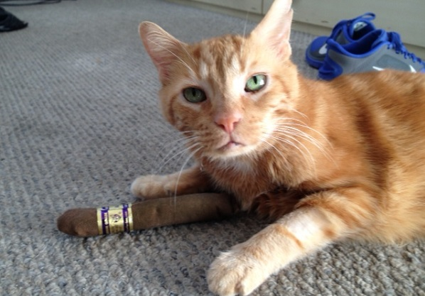 Higgs the Cat Celebrates the Physics Nobel with a Cigar