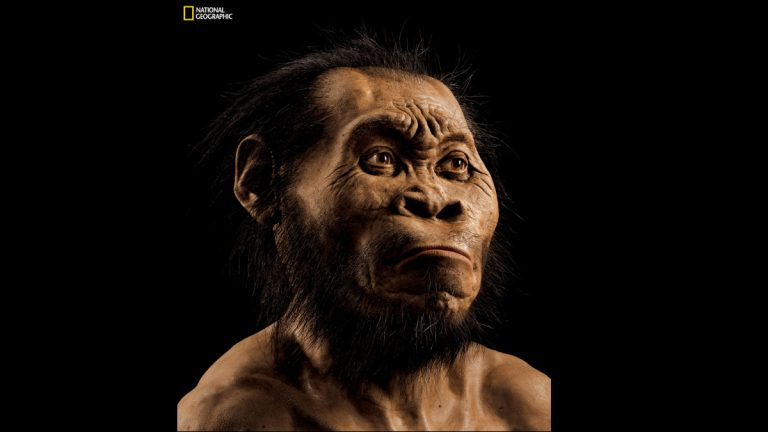 This March 2015 photo provided by National Geographic from their October 2015 issue shows a reconstruction of Homo naledi's face by paleoartist John Gurche at his studio in Trumansburg