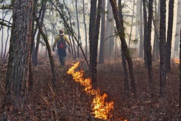 A fire line in a controlled burn. (Image courtesy of New Jersey Forest Fire Service)