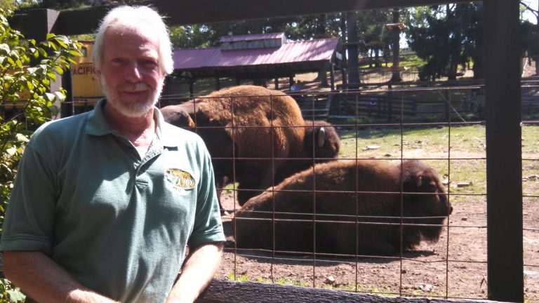 Elmwood Zoo curator David Wood with the bison. (Kimberly Haas/WHYY)