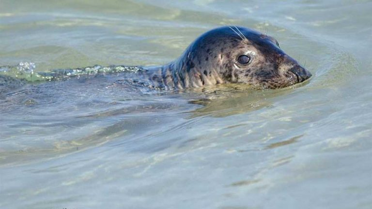 The seal in Island Beach State Park on Aug. 20 by JSHN contributor Angela Previte, who says she was at a safe distance using a 300 mm lens.