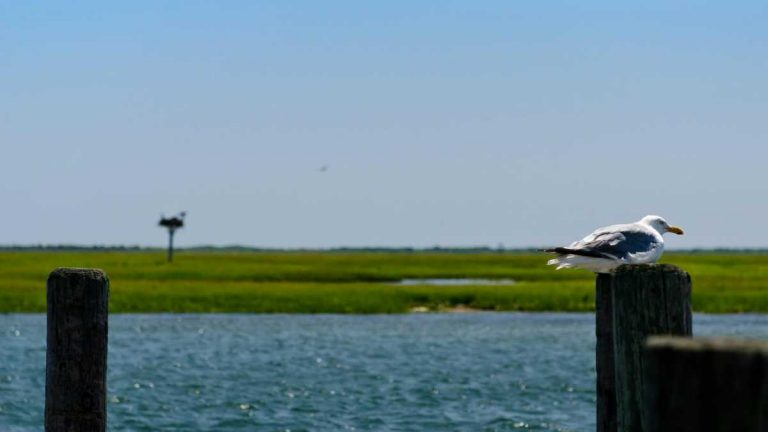 Sedge Island off Island Beach State Park. (Photo: Jennifer Husar)