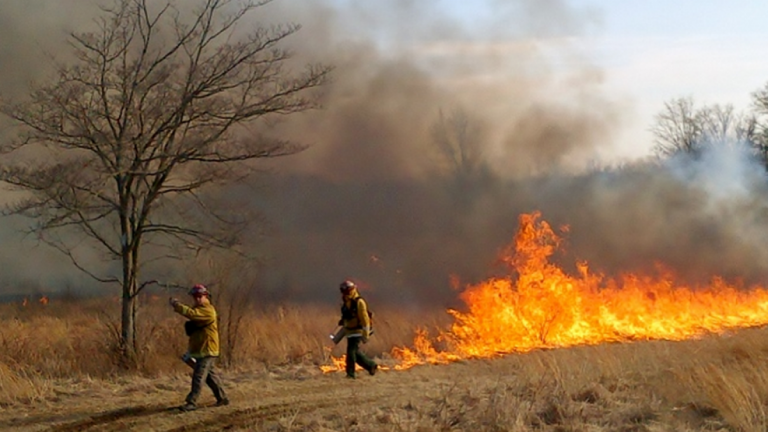 A controlled burn at Monmouth Battlefield in March 2014. (Photo: NJ Forest Fire Service)