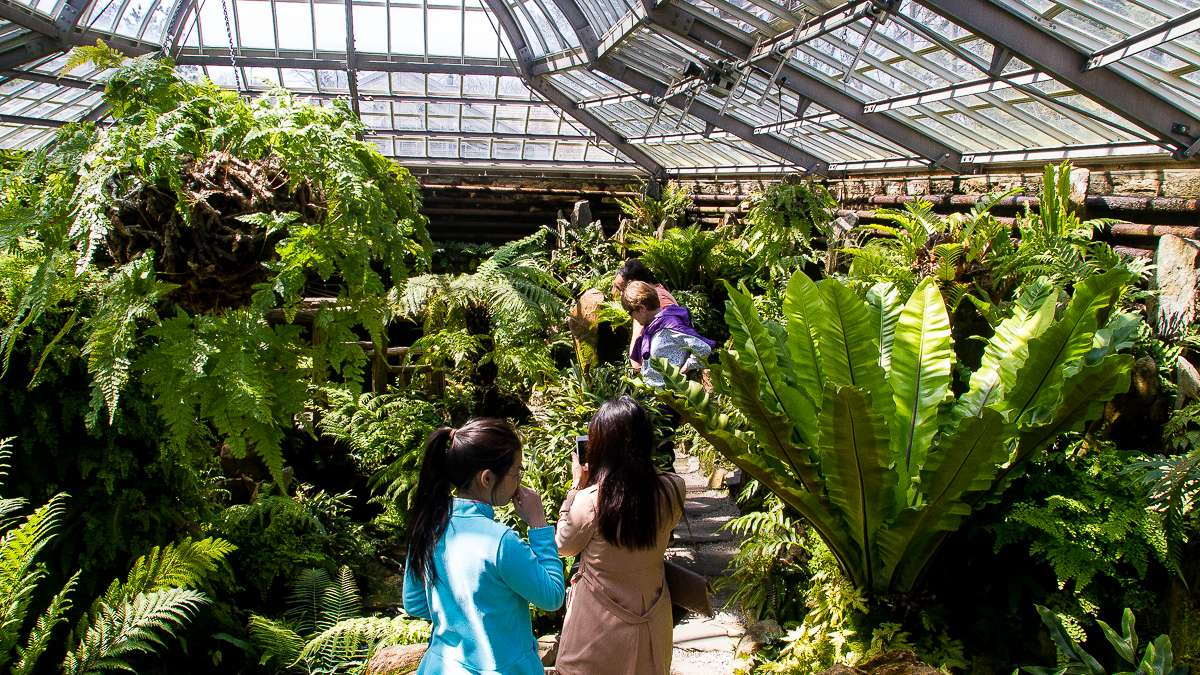 Families exploring the greenhouse at Morris Arboretum as last weekend's Cherry Blossom Festival. (Brad Larrison/for NewsWorks)