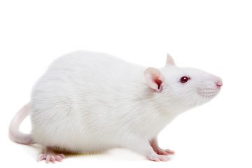 Researchers at MIT recently implanted memories into a mouse brain. A presidential commission is looking into tricky ethical issues posed by biomedical developments.