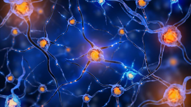 What can the neuronal connections in our brains tell us about how we handle stress long-term? (http://www.shutterstock.com/pic-199594100/stock-photo-illustration-of-a-nerve-cell-on-a-colored-background-with-light-effects.html?src=U1tw7pMTz7sXaaBFl5If/A-1-9